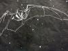 Pallid Bat in Black on White Linocut